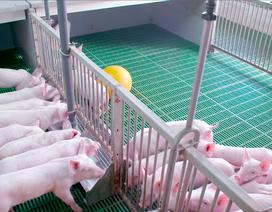 Triển vọng đột phá từ những mô hình trang trại công nghệ cao