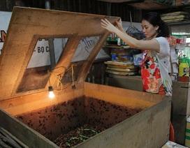 """Kiếm trăm triệu mỗi tháng nhờ """"độc chiêu"""" nuôi côn trùng trên sân thượng"""