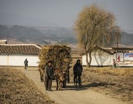Triều Tiên xin viện trợ nhân đạo do dịch cúm bùng phát