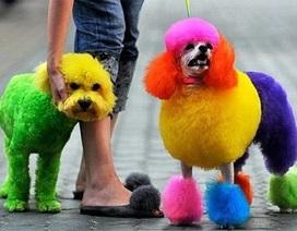 Lí do bạn không nên nhuộm lông thú cưng bằng thuốc nhuộm tóc của người