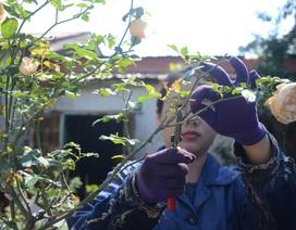 Nữ nhân viên y tế kiếm thêm gần chục triệu đồng từ hơn 2.000 gốc hồng