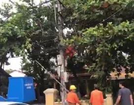 Công nhân điện lực tử vong sau khi sửa lưới hạ áp trên cột điện
