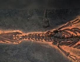 """Phát hiện loài """"khủng long bạo chúa"""" dưới biển 85 triệu năm tuổi"""