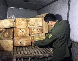 Bắt ô tô vận chuyển trái phép gỗ pơ mu tại Lâm Đồng