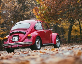 """""""Con bọ"""" Beetle - 80 năm một huyền thoại"""