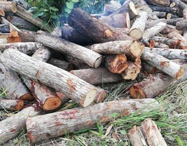 Lâm tặc tưới xăng đốt gỗ tang vật, một kiểm lâm viên bị bỏng