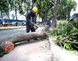 TPHCM: Khó đấu thầu chăm sóc cây xanh do… ảnh hưởng biến đổi khí hậu?