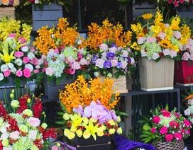 Đà Nẵng: Hoa ngập tràn các tuyến phố dịp 20/10