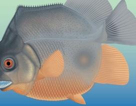 Sinh vật giống cá piranha 150 triệu năm trước dùng răng nanh ăn thịt con mồi