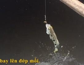Xem cá mang rổ phun nước, đớp mồi điệu nghệ đẹp mắt