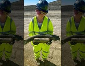Phát hiện xương voi ma mút 130.000 năm tuổi khi… đào đường