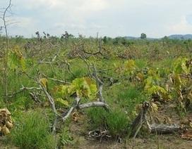 Bắt đối tượng tham gia hủy hoại rừng tự xưng là phóng viên