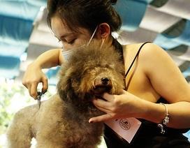 Cuối tuần đi xem thi chăm sóc... cún cưng