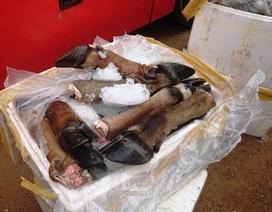 Hơn 5 tạ chân trâu bò không nguồn gốc bị bắt giữ