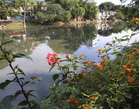 Đường hoa thơ mộng bên bờ sông ô nhiễm ở Hà Nội