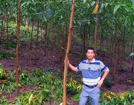 Đam mê rừng trồng, nông dân trẻ thu về tiền tỷ mỗi năm