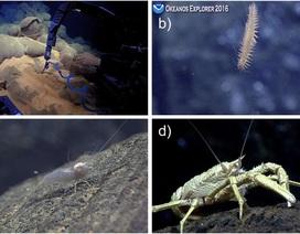 """Hé lộ những hệ sinh thái mới dưới """"hố địa ngục"""" sâu nhất đại dương"""