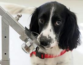 Sử dụng chó để phát hiện… bệnh sốt rét trong tương lai