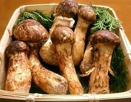 Những loại nấm quý hiếm và đắt đỏ nhất thế giới