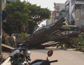 Hà Nội: Cây đa cổ thụ đổ chắn ngang đường, nhiều người hốt hoảng