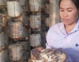 Nam Định: Mỗi năm kiếm hơn nửa tỷ đồng nhờ trồng nấm sạch
