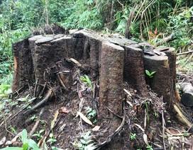 Phó Thủ tướng chỉ đạo Lâm Đồng điều tra làm rõ các vụ phá rừng