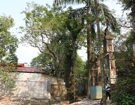 Cận cảnh cây sưa trăm tỷ đồng sắp được mang đấu giá ở Hà Nội