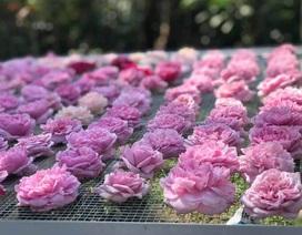 Trà hoa hồng nguyên bông 10 triệu đồng/kg, ông chủ cũng không dám uống nhiều