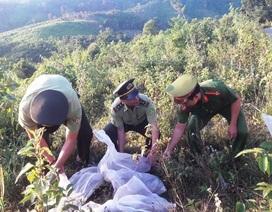 Thả hàng trăm cá thể rắn về môi trường tự nhiên