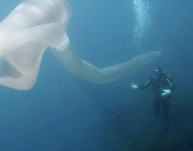 Thợ lặn 'chết ngất' khi nhìn thấy giun biển khổng lồ dài 8m