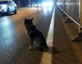 Dân mạng phát sốt với chú chó trung thành đứng đợi chủ nhân 80 ngày