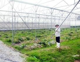 Vĩnh Phúc tạo nhiều cơ chế, chính sách để nông nghiệp bứt phá trong tương lai