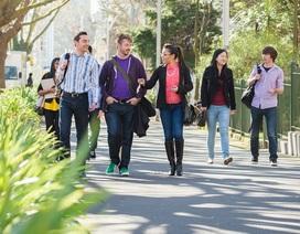 4 học bổng dành cho sinh viên quốc tế đang học tại New Zealand mở đơn từ tháng 11