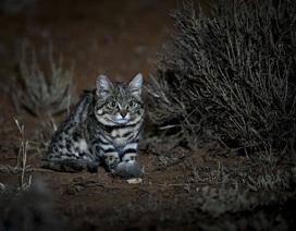 """Lộ diện """"thợ săn"""" trong bóng đêm điêu luyện nhất trong tự nhiên"""