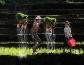 Ngỡ ngàng trước những tác phẩm đoạt giải ảnh Di sản Việt Nam 2018