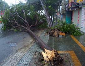 Bão số 9 đổ bộ vào đất liền, nhiều cây gãy đổ tại Vũng Tàu