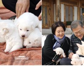 """Tổng thống Hàn Quốc """"khoe"""" món quà quốc khuyển từ Triều Tiên"""