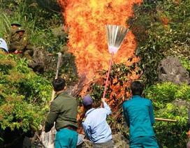 Hàng trăm người dập đám cháy rừng giả định trong di sản Tràng An