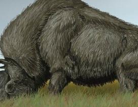 Lần đầu tiên phân tích được DNA của loài kỳ lân Siberia bí ẩn