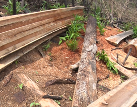 Đắk Nông kỷ luật nhiều cán bộ dính sai phạm giao nhận đất rừng