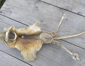 Sinh vật kì lạ xuất hiện trên bờ biển New Zealand