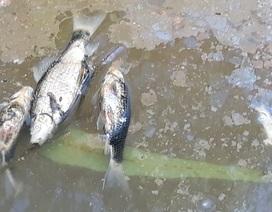 Nước thải bột mì làm cá chết, người dân bức xúc tại Bình Định!