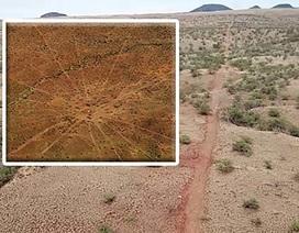 """Phát lộ """"bản đồ hình sao"""" bí ẩn dài gần 5 km ở Hawaii"""