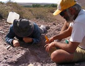 Phát hiện hoá thạch loài khủng long mới ở Argentina