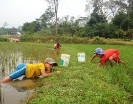 Học sinh miền núi dầm nước bắt cua đồng để kiếm tiền đi học
