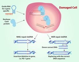 Chỉnh sửa gene với CRISPR: Hứa hẹn và nguy cơ