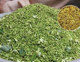 Phát hiện hoạt chất quý ngừa tai biến có trong hoa hòe