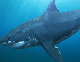 """Sự biến mất bí ẩn của """"siêu cá mập"""" Megalodon đã có câu trả lời?"""
