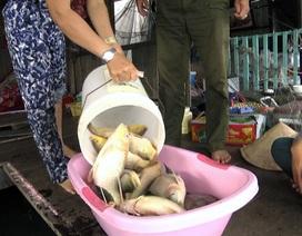 Cá trên sông La Ngà lại chết trắng bè