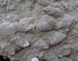Phát hiện gần trăm dấu chân khủng long ở Hastings